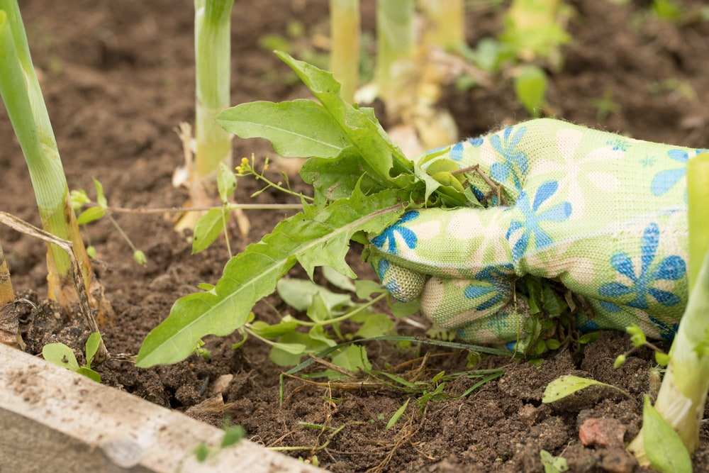 Get the weeds out of your harvest